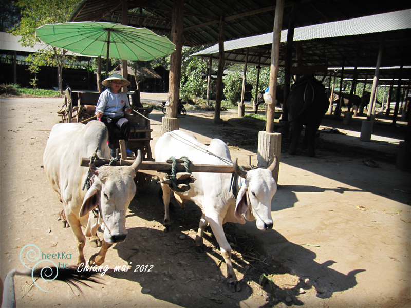 Chiangmai-Thailand